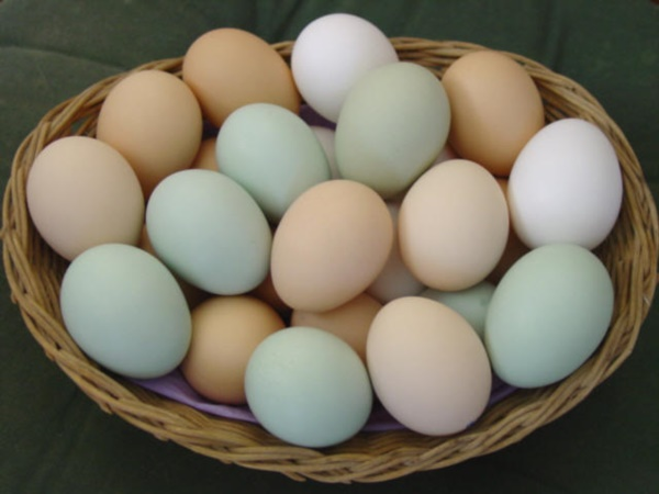 Magical Uses of Eggs in Daily Life0171