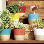 Mini indoor gardens ideas for anyone