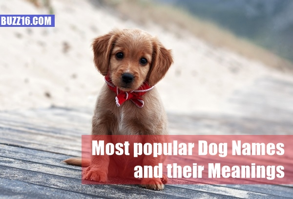 Most popular Dog Names and their Meanings1.1