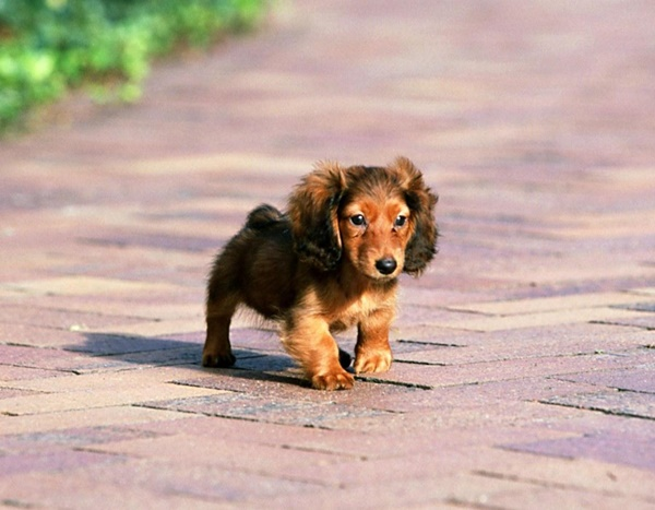 Most popular Dog Names and their Meanings10
