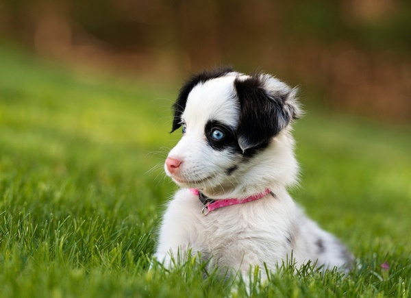Most popular Dog Names and their Meanings17