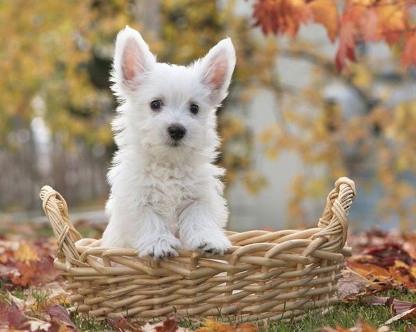 Most popular Dog Names and their Meanings2