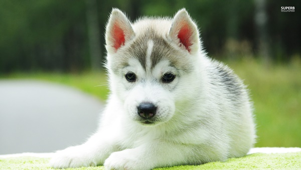 Most popular Dog Names and their Meanings24