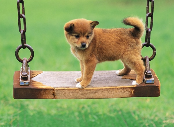 Most popular Dog Names and their Meanings4