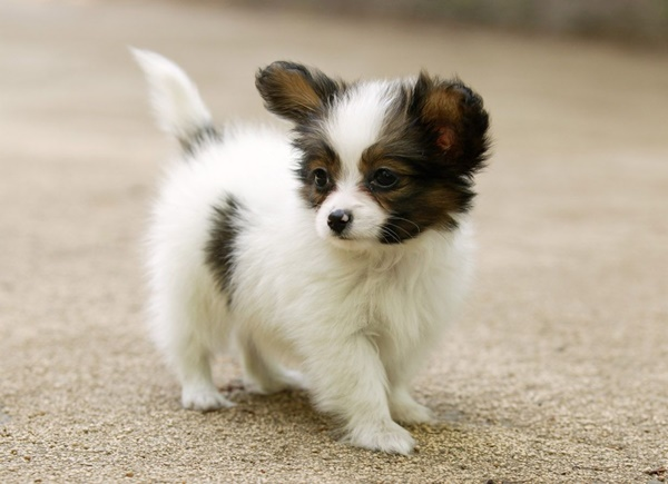 Most popular Dog Names and their Meanings6