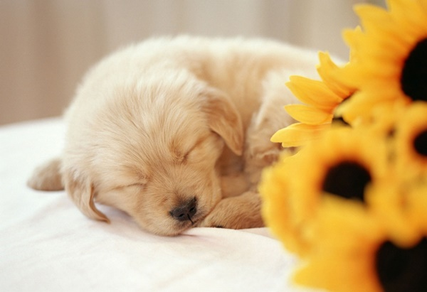 Most popular Dog Names and their Meanings9