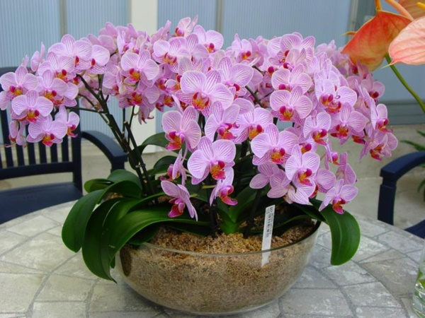 mini indoor gardens ideas for anyone0271
