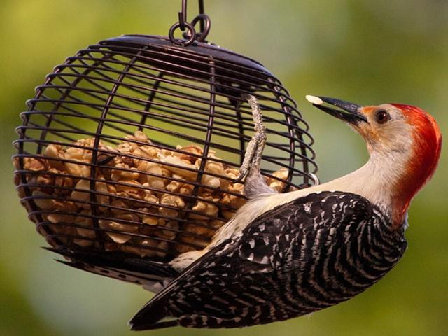 50 Magical Bird-feeders That Will Attract Birds in Your Garden