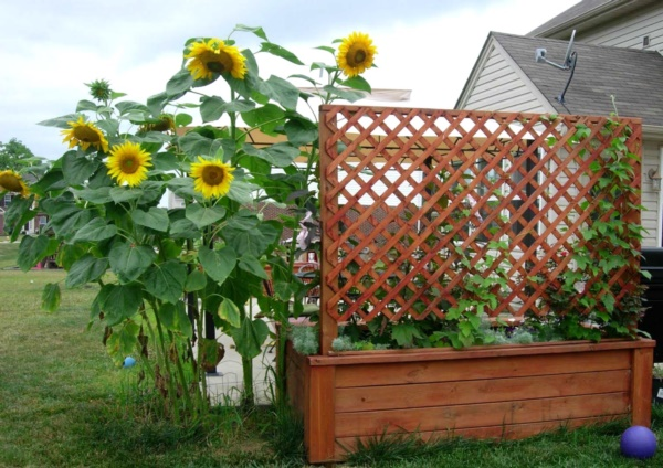 Beautiful and Safe garden privacy ideas0131