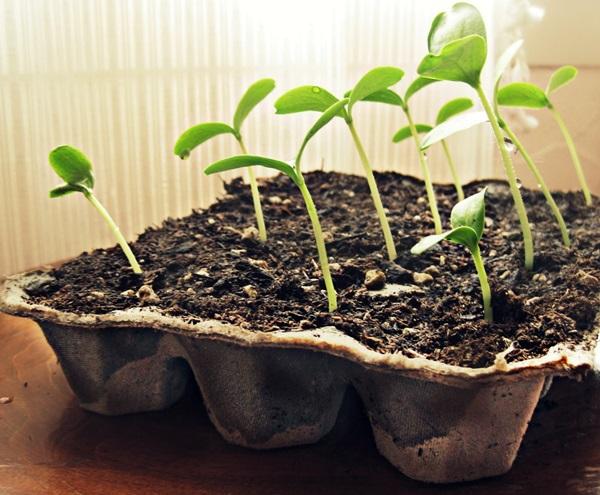 Life changing gardening hacks to try (1)