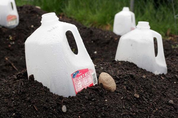 Life changing gardening hacks to try (10)