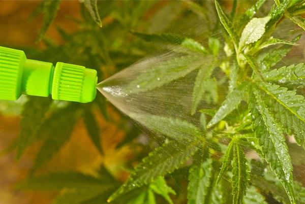 Life changing gardening hacks to try (12)