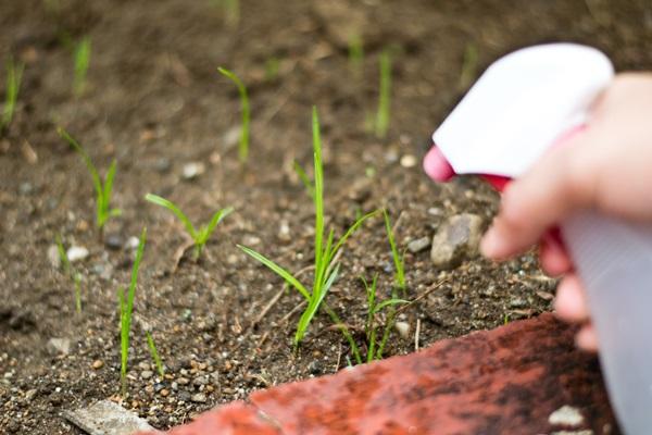 Life changing gardening hacks to try (14)