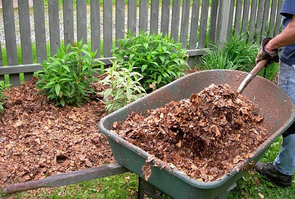 Life changing gardening hacks to try (15)