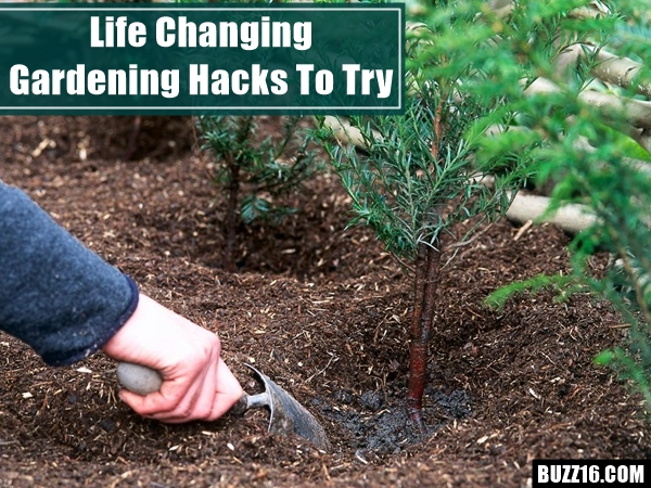 Life changing gardening hacks to try (2)
