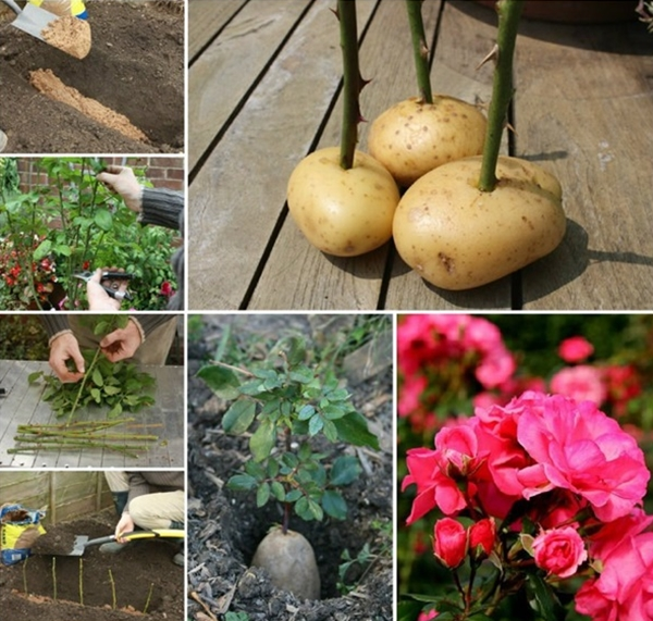 Life changing gardening hacks to try (20)