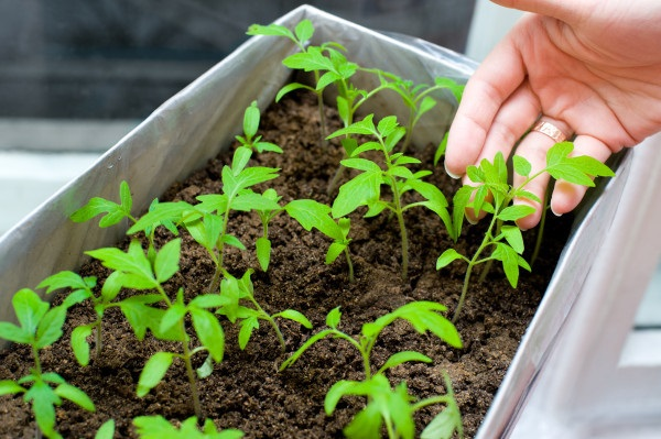 Life changing gardening hacks to try (23)