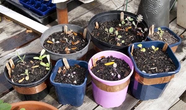 Life changing gardening hacks to try (3)