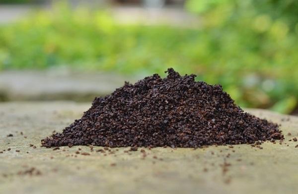 Life changing gardening hacks to try (6)