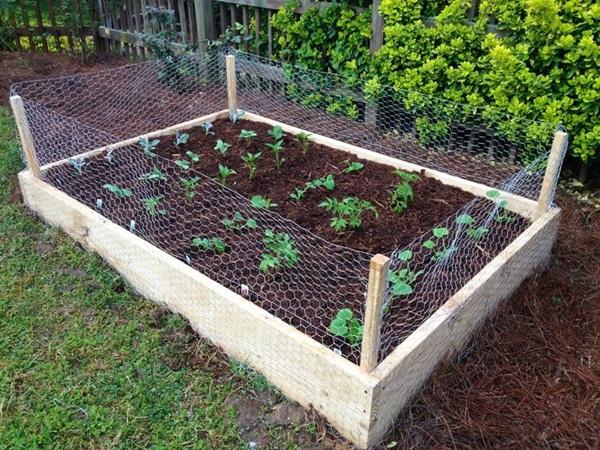 Life changing gardening hacks to try (8)