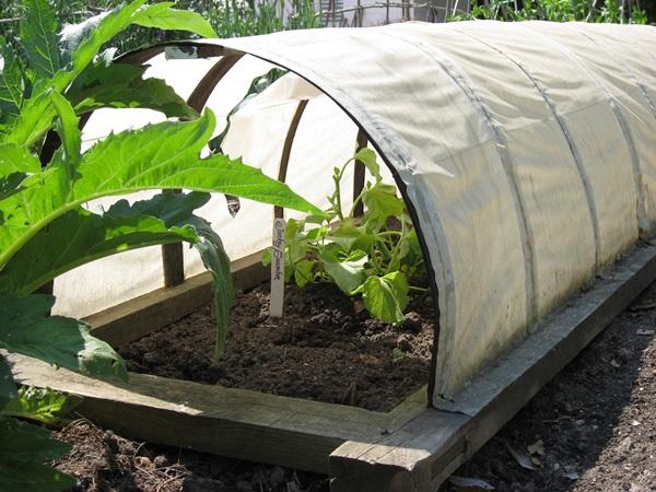 Life changing gardening hacks to try (9)