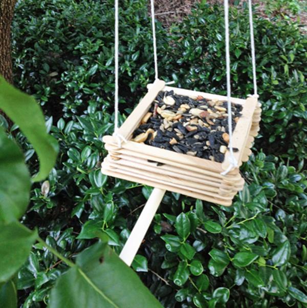 birds feeder0001