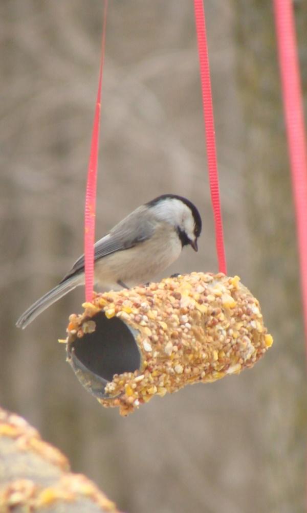 birds feeder0011