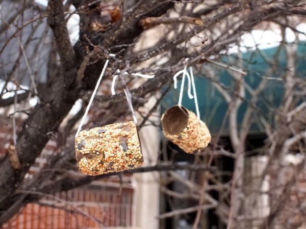 birds feeder0021
