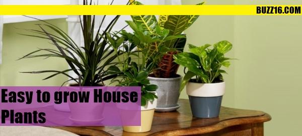home plant0001