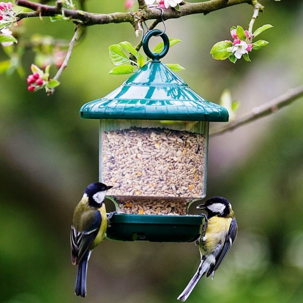 magical birds feeders to attract birds on your garden0011