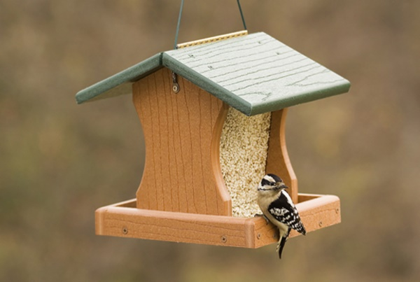 magical birds feeders to attract birds on your garden0131