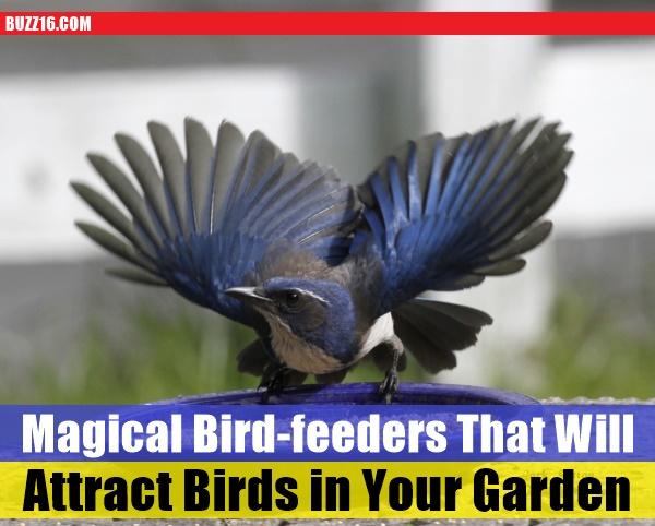 magical birds feeders to attract birds on your garden0171