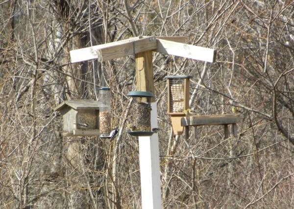magical birds feeders to attract birds on your garden0191
