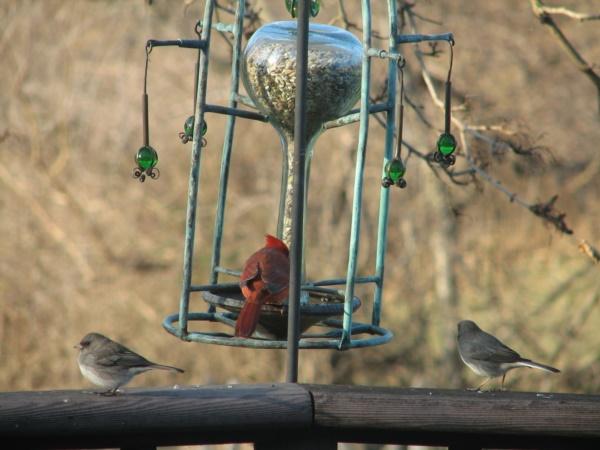 magical birds feeders to attract birds on your garden0201