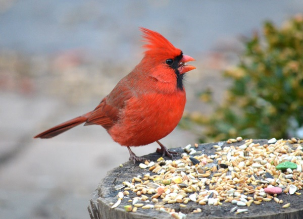 magical birds feeders to attract birds on your garden0251