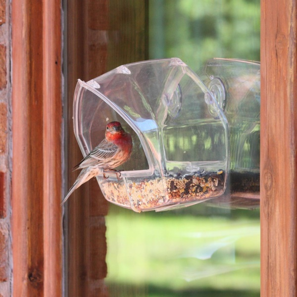 magical birds feeders to attract birds on your garden0281