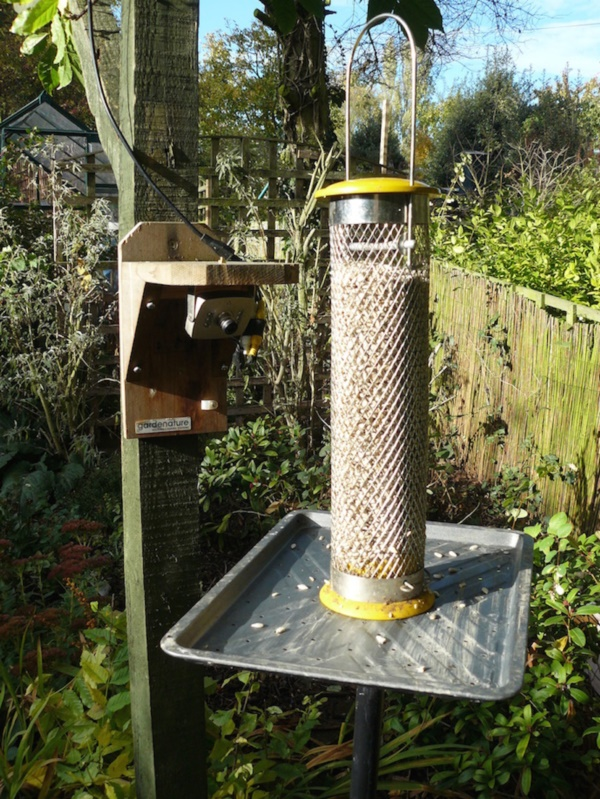magical birds feeders to attract birds on your garden0291