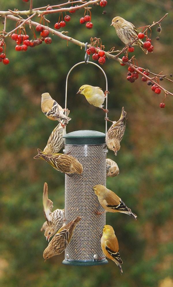 magical birds feeders to attract birds on your garden0311