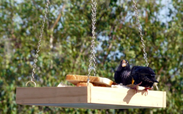 magical birds feeders to attract birds on your garden0321