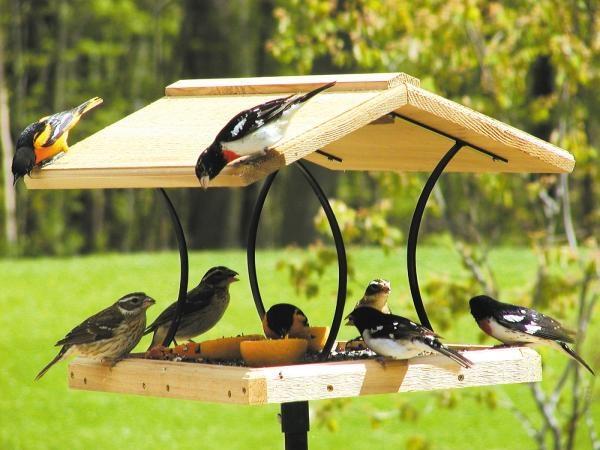 magical birds feeders to attract birds on your garden0351