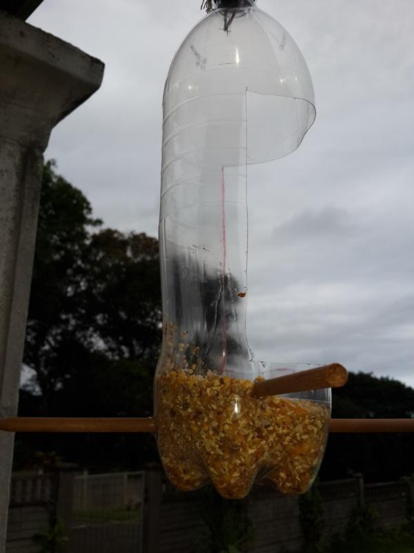 magical birds feeders to attract birds on your garden0361