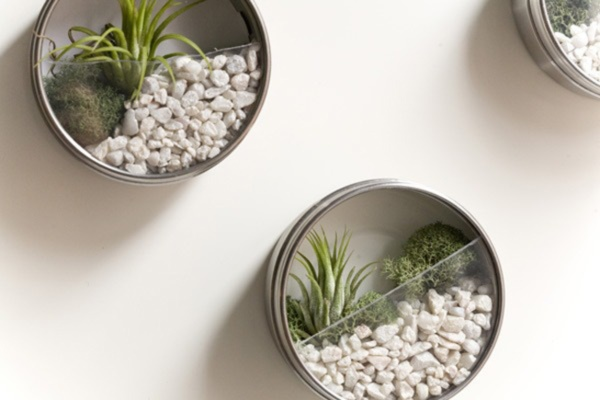 Magical Terrarium ideas to install in Your Home0081