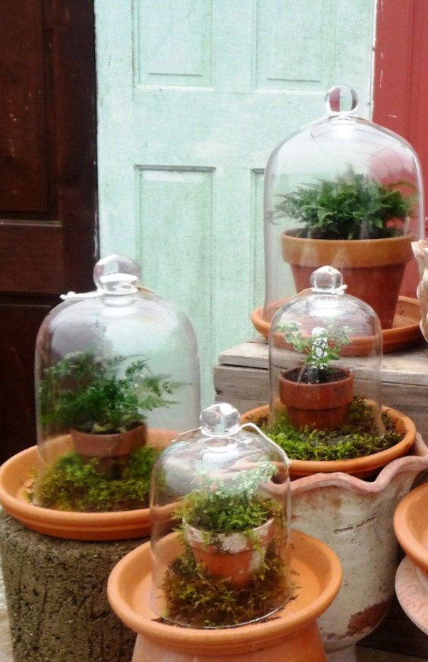 Magical Terrarium ideas to install in Your Home0101