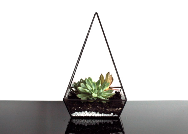 Magical Terrarium ideas to install in Your Home0131