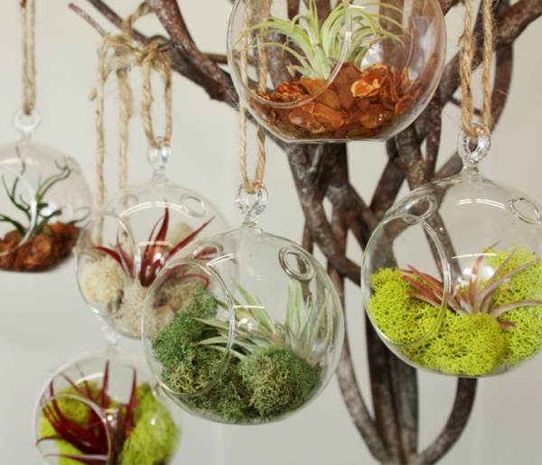 Magical Terrarium ideas to install in Your Home0161