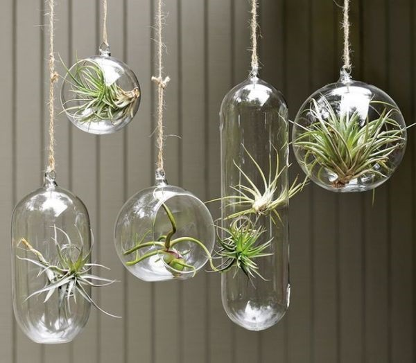 Magical Terrarium ideas to install in Your Home0171