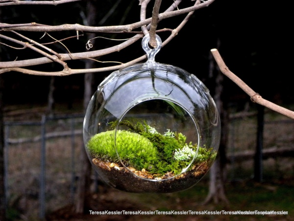 Magical Terrarium ideas to install in Your Home0181