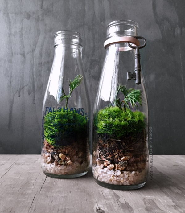 Magical Terrarium ideas to install in Your Home0201