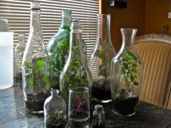 Magical Terrarium ideas to install in Your Home0291