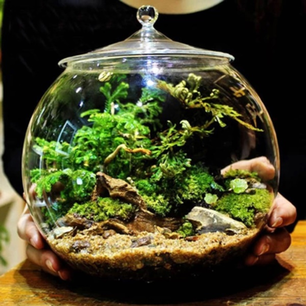 Magical Terrarium ideas to install in Your Home0301